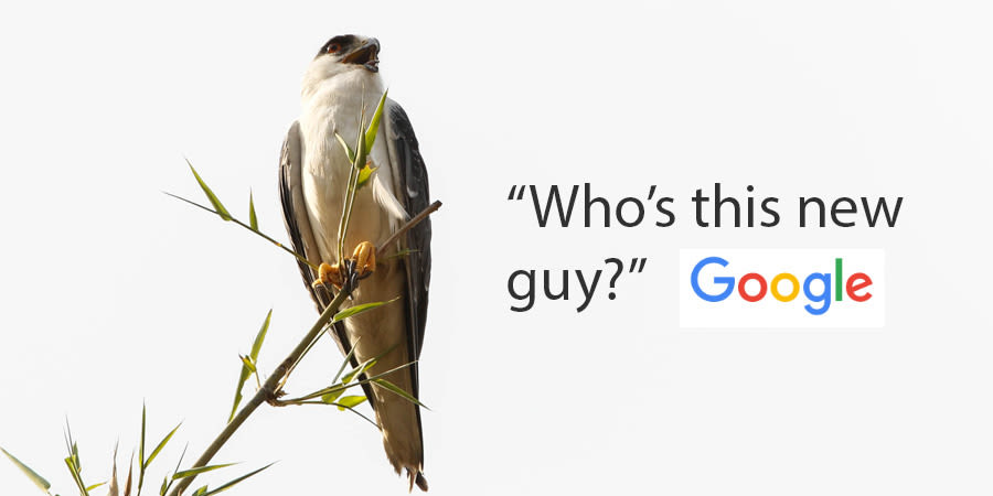 New guy in Google